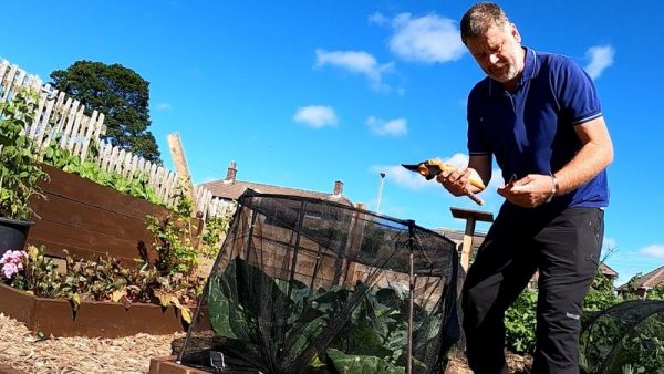 Gardening guru Tony Smith reveals his top tips on how to start your own vegetable garden