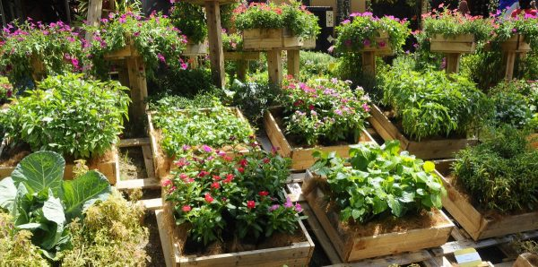 Top five upcycle ideas for backyard vegetable gardens