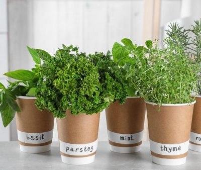 Mistakes You Are Making With Your Kitchen Herb Garden