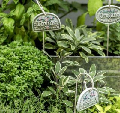How Herb Gardening Can Save Home Cooks a Ton of Money