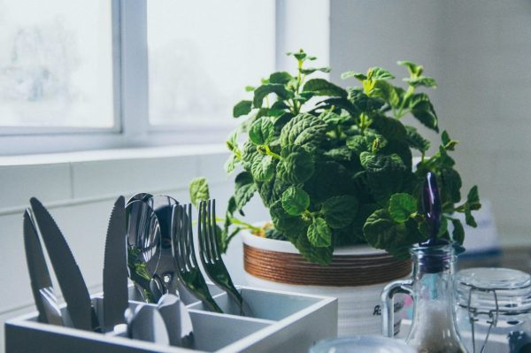 How To Set Up an Indoor Herb Garden in Your Kitchen