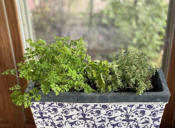You can have fresh herbs, even in winter