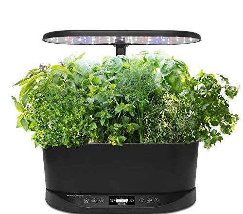 The Best Indoor Gardens and Herb Garden Kits for Families