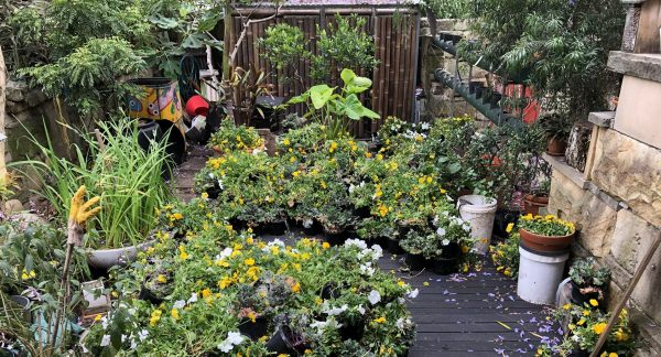 Gardening for ourselves and Earth
