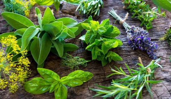How To Make Your Own Medicinal Herb Garden