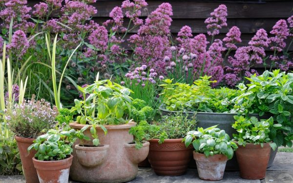 How to grow happy herbs, a quick guide by gardening expert Helen Yemm
